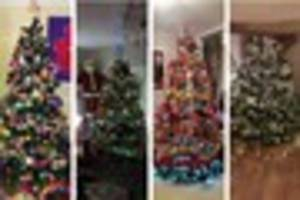 christmas trees across tamworth - your photos