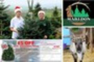 get your voucher for £5 off at marldon christmas tree farm...