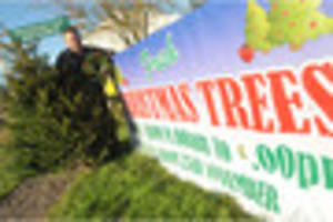 Christmas trees ready to spruce up your festive Burton or South...