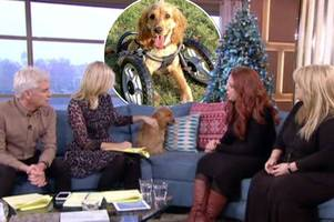 Holly Willoughby, Phillip Schofield and This Morning viewers fall in love with adorable puppy Wonky Wanda