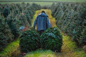 Christmas Tree Farms Near Me in New Jersey (NJ)