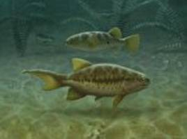 how humans lost their tails, twice: 350 million-year-old fish fossils provide new insight into evolution