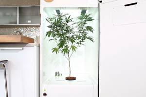 Growing marijuana at home could become as easy as plugging in a machine and walking away