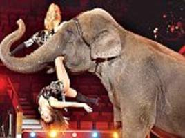 'they could hardly move because of injuries and pain': all but one circus in india is banned from using elephants in performances after probe uncovers 'deplorable abuse and cruelty'