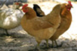 keep your birds inside for 30 days, poultry keepers are advised