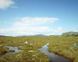 Indonesia expands protection for peatlands, climate