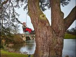 blenheim palace's rotting cedar could 'topple' on harry potter fans
