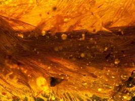 feathery dinosaur tail discovered frozen in amber
