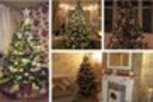 your dazzling christmas trees - pictures