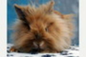 PETS' CORNER: How to keep your pet bunny happy and healthy