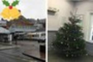 each member of staff paid for this christmas tree to give festive...