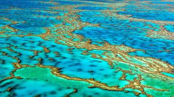 japanese tourist dies at australia's great barrier reef
