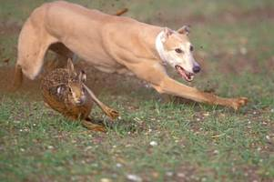 hare coursing gangs chased by cambridgeshire police