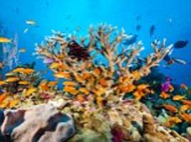 how bucket lists can be deadly: great barrier reef death rates have doubled this year because people are trying to tick off their goals
