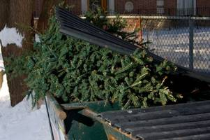 watch christmas trees getting recycled at cherry hinton hall