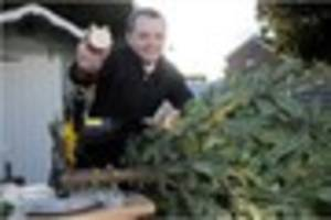 derby city council's christmas tree recycling tip - use them to...