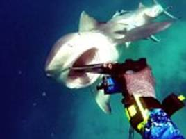 heart-stopping footage from great barrier reef shows diver attacked by killer bull shark