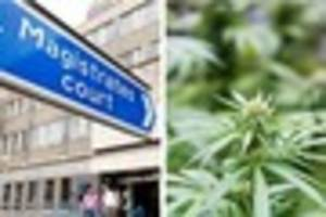 yeovil man claims cannabis found in his home was put there by...