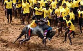 Jallikattu: AIADMK demands centre to promulgate ordinance to revive banned traditional game