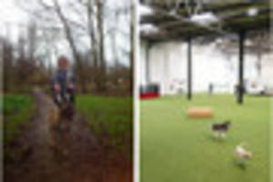 Indoor playground for dogs in the pipeline