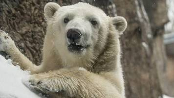 us snow: oregon zoo closes