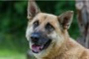 Urgent appeal  to find missing dog as freezing weather sets in