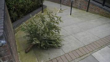 pining for the fallen eight million christmas trees?