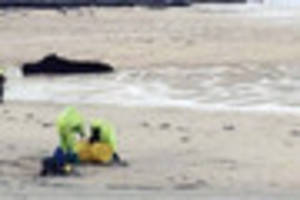 'Suspect barrel' washes up on beach
