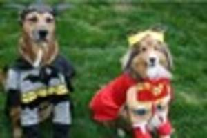 Vet issues advice ahead of National Dress Up Your Pet Day