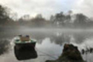 Why 60 Christmas trees have been submerged into Allestree Lake,...