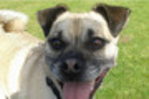 could this dog have the longest tongue in swansea bay?