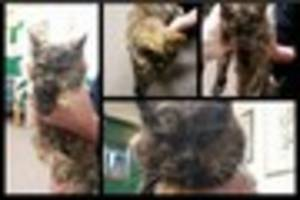 Lost moggy ends up in Paignton Zoo - can you help her?