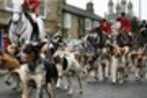 Hunt admits  its fox hounds were involved in  'attack'  at  beach