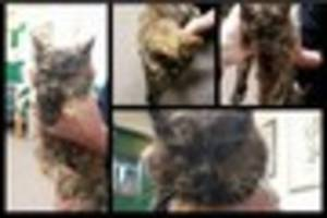Paignton Zoo lost cat is reunited with owners