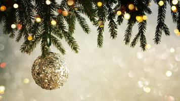 Christmas doo: Pigeon delays removal of Fort William tree