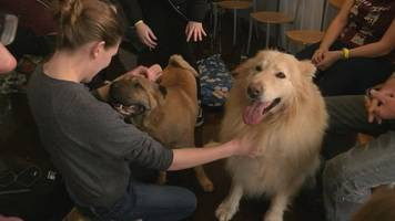 Aberystwyth students get dog therapy to ease stress