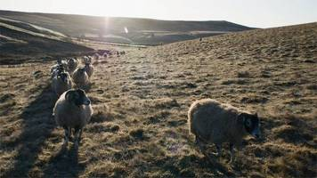 Brexit: Welsh lamb 'perfect storm' fear over New Zealand deal
