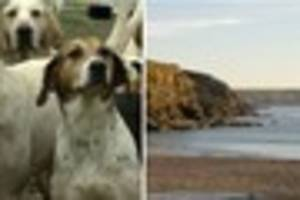 National Trust faces backlash for allowing hunt on beach in...