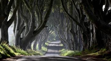 bid to ban traffic at games of thrones dark hedges in northern ireland starts
