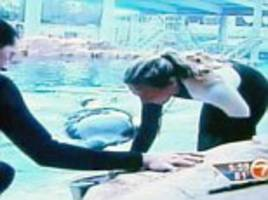 life of orlando seaworld orca blamed for three fatalities