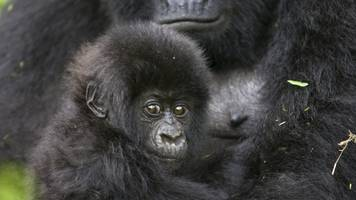 the future looks very grim for more than half of our fellow primates