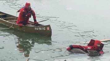 rescuers break the ice for deer trapped in middle of frozen lake