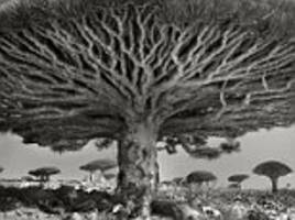 the world's oldest trees and where to find them