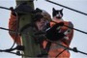 Watch the moment Betty the cat is plucked from the top of a power...