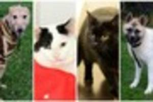 Give a dog or cat a home: RSPCA Blakely Farm at Cellarhead