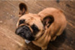meet fudge - the ambassador dog with the anti-bullying message