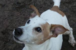 Old dog seeks new home in West Lothian