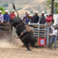 fun and rodeo draw crowds at wairoa a&p show