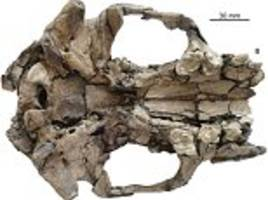 Fossil of an ancient giant otter is discovered in China