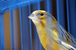 julian assange addresses public concerns regarding riseup canary statement